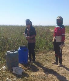 Titel: On the cotton fields, people got water from containers. - Beschreibung: C:\Users\Maxie\Documents\Arbeit UGF\Harvest Report\Photos\1 - General\DSC_1307.jpg